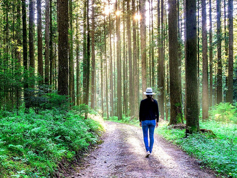 Fulfilling God's Will- Sun seeping through trees as a woman wearing a hat walks on a trail