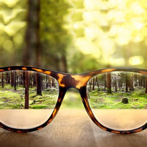 Attitude of the Undistracted- Trees viewed through lenses of tortoises brown rimmed eyeglasses