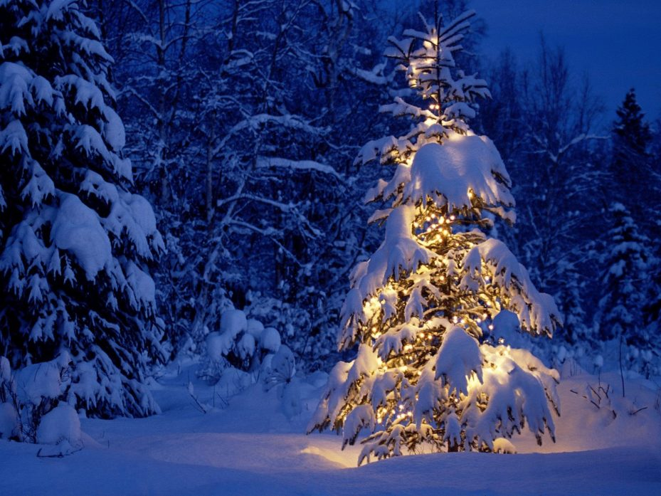 News That Brings Great Joy- Snow-covered lit Christmas tree with snow-covered trees in the background