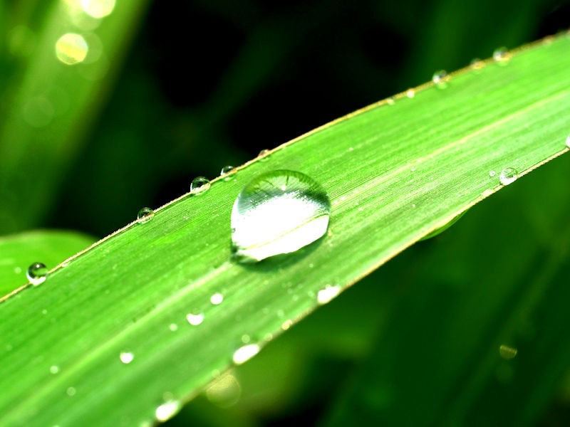 Starting Fresh- A dewy green leaf with a drop of water on it