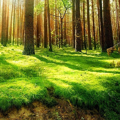 Mind Games- Forest of trees in the background with sunlight shining onto grass