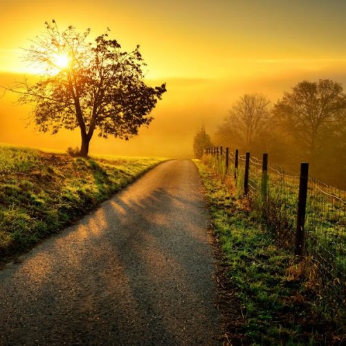 Life is Precious- Sun rising in the background of a tree-lined path